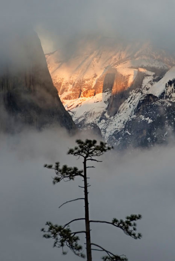 Clouds Rest and pine tree at sunset, Yosemite National Park